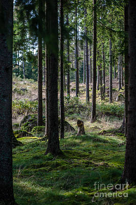 Photograph - The Forest by Jorgen Norgaard