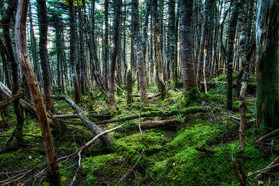 Photograph - The Forest Primeval  by Jeff Sinon