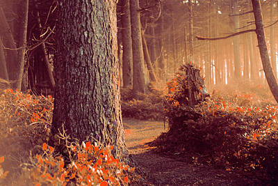 Anti-bullying Photograph - The Forest Whispers Autumn by Harmony Lawrence