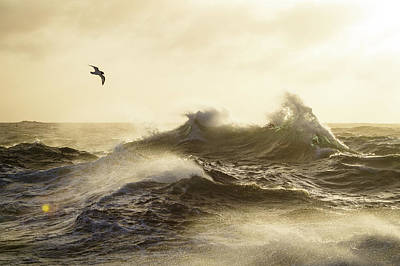 Sea Birds Photograph - The Formidable Drake Passage by Justin Hofman