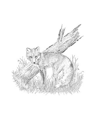 Drawing - The Fox by Carl Genovese