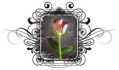 The Framed Rose Art Print by Mauro Celotti