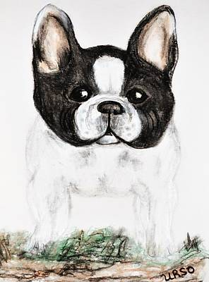 Drawing - The Frenchton by Maria Urso