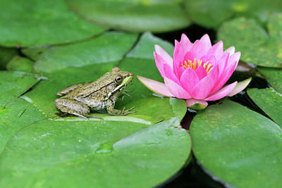 Photograph - The Frog & The Lily by Corrie White Photography