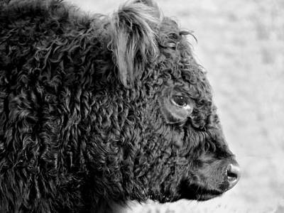 Photograph - The Galloway Profile by Richard Ortolano