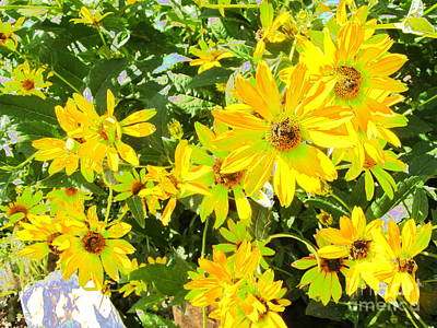 Photograph - The Garden Grows by Diane Miller