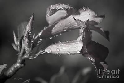 Toxic Digital Art - The Garden Of Dreams  by Sharon Mau