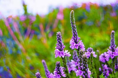 Photograph - The Garden Palette by Christi Kraft