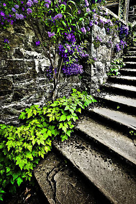Photograph - The Garden Steps by Meirion Matthias