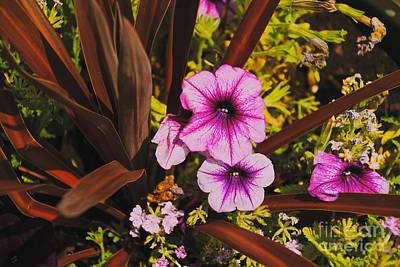 Photograph - The Garden by William Norton