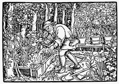 The Gardener, 1550 Print by Granger