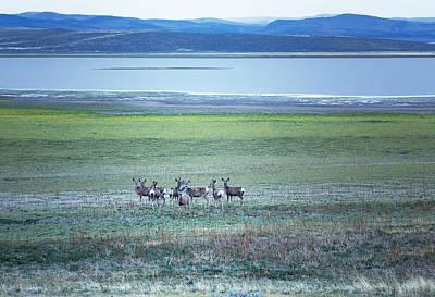 Mule Deer Herd Photograph - The Gathering by Belinda Greb