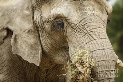 The Gathering - Elephant At Work Art Print by Inspired Nature Photography Fine Art Photography