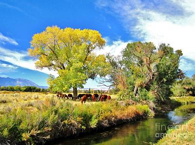Owens River Photograph - The Gathering by Marilyn Diaz