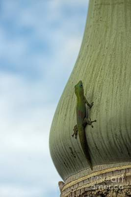 Photograph - The Gecko And The King by Peggy Hughes