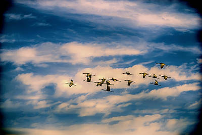 Photograph - The Geese Fly West by John Haldane