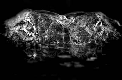 Alligator Photograph - The Ghost In The Water by Mark Andrew Thomas
