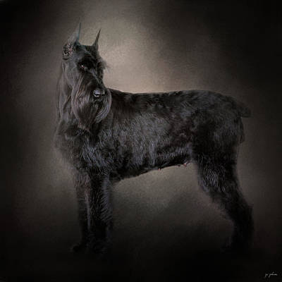 Photograph - The Giant Black Schnauzer by Jai Johnson