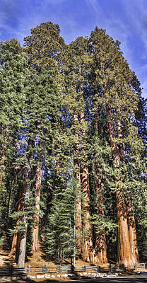 Digital Art - The Giant Forest by Photographic Art by Russel Ray Photos