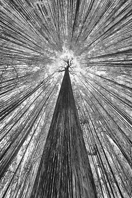 Trunks Photograph - The Giant by Francois Casanova