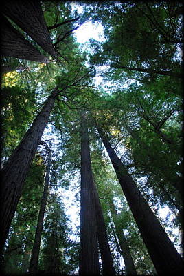 Photograph - The Giant Redwoods I by Kathy Sampson