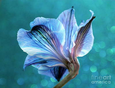 Blue Flowers Photograph - The Gift by Krissy Katsimbras