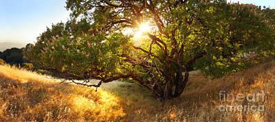 The Giving Tree Print by Matt Tilghman