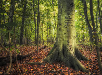 Markings Photograph - The Giving Tree by Scott Norris