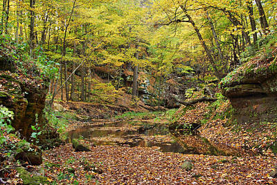 Photograph - The Glen In Autumn by Leda Robertson