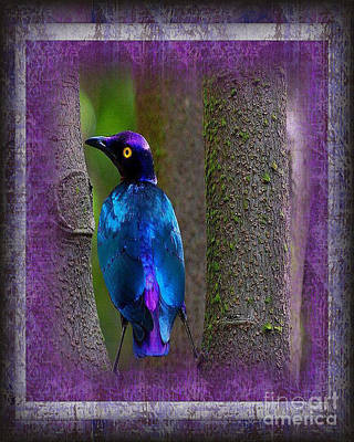 Photograph - The Glorious Purple Glossy Starling by Don Melton