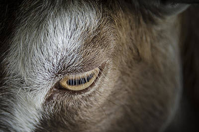 Photograph - The Goats Eye by Bradley Clay