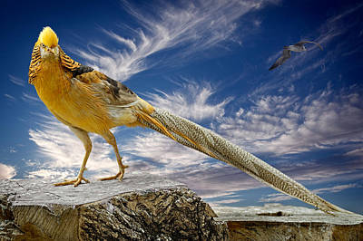 Photograph - The Golden Bird by Zoran Buletic