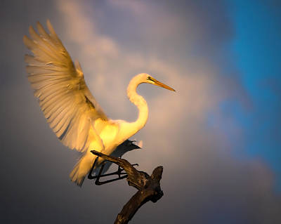 The Golden Egret Art Print
