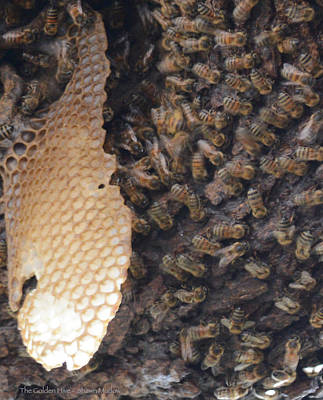 The Golden Hive  Art Print by Shawn Marlow