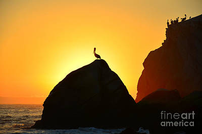 Photograph - The Golden Hour by Debra Thompson