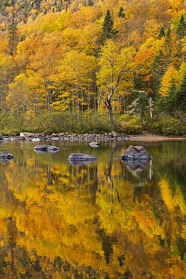 Laurentians Photograph - The Golden Mirror by Mircea Costina Photography