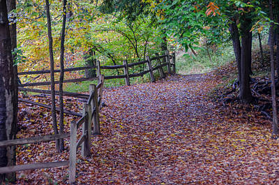 Photograph - The Golden Path   7d07627 by Guy Whiteley
