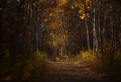 Photograph - The Golden Road by Stuart Deacon