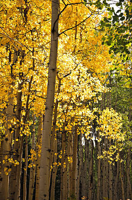Photograph - The Golden Tree by Eric Rundle