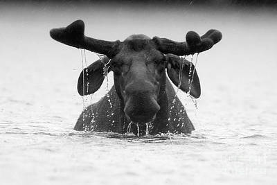 Photograph - The Goofy Moose by Jane Axman