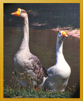 The Goose And The Gander Print by Patricia Keller