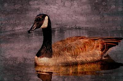 Goose Photograph - The Goose by Kerry Hauser
