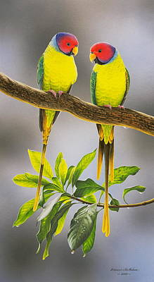 Painting - The Gorgeous Guys - Plum-headed Parakeets by Frances McMahon