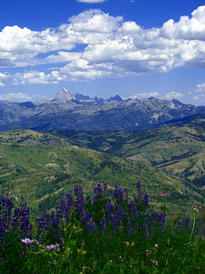 Photograph - The Grand And Lupines by Raymond Salani III