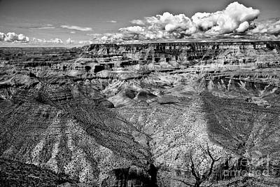 Photograph - The Grand Canyon by Bob and Nadine Johnston