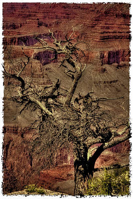 Photograph - The Grand Canyon Vintage Americana V by David Patterson