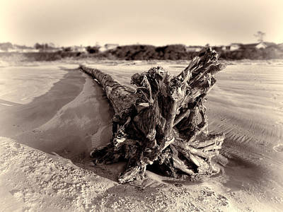 Photograph - The Granddaddy Of Driftwood by HW Kateley