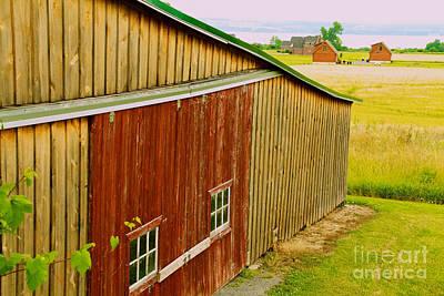 Photograph - The Grape Farm by William Norton