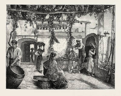 The Grape Harvest In Italy Art Print by Italian School