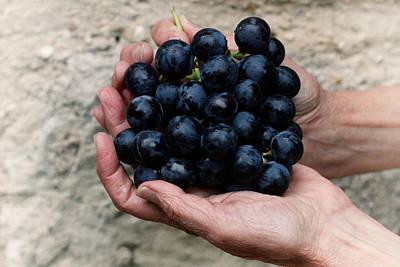 The Grape Picker Art Print